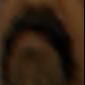 buhaevius erectus
